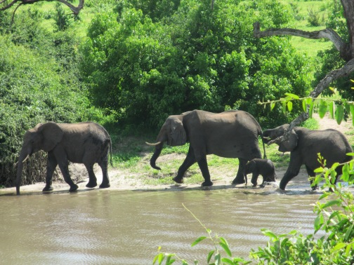 Elephant family cooling off